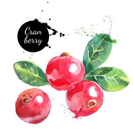 owoców: Ręcznie rysowane żurawina akwarela malowanie na białym tle. Ilustracji wektorowych z jagodami