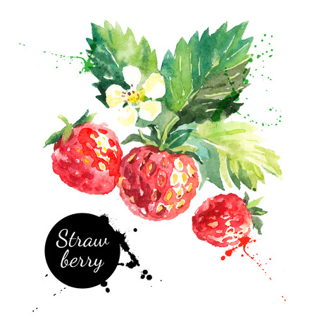 Hand drawn watercolor painting strawberry on white background. Vector illustration of berries Vettoriali