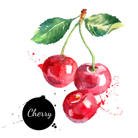frutas: Mano de la cereza de la acuarela dibujada sobre fondo blanco. Ilustraci�n vectorial de la baya