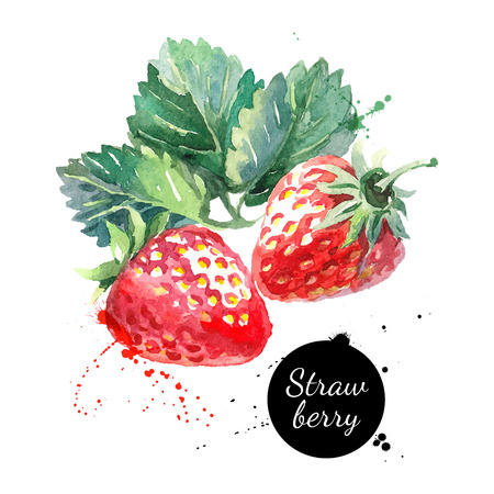 Hand drawn watercolor painting strawberry on white background. Vector illustration of berries Çizim