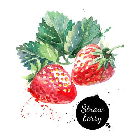 aquarelle: Main peinture à l'aquarelle dessinée fraise sur fond blanc. Vector illustration de baies