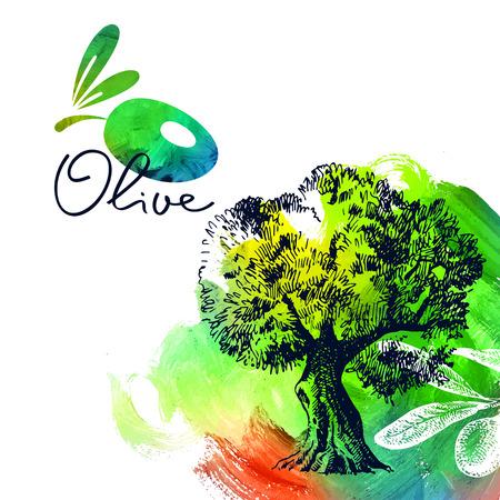 feuille arbre: Vintage background d'olive avec la main illustration tirée de croquis et la peinture acrylique coup de pinceau. Conception de package. Vector illustration