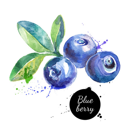 Hand drawn watercolor painting blueberry on white background. Vector illustration of berries Vettoriali