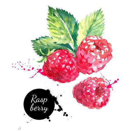 frutas: Mano de frambuesa acuarela dibujada sobre fondo blanco. Ilustración del vector de las bayas Vectores