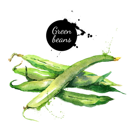 Green beans. Hand drawn watercolor painting on white background. Vector illustration 스톡 콘텐츠