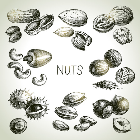 tree nuts: Hand drawn sketch nuts set. Vector illustration