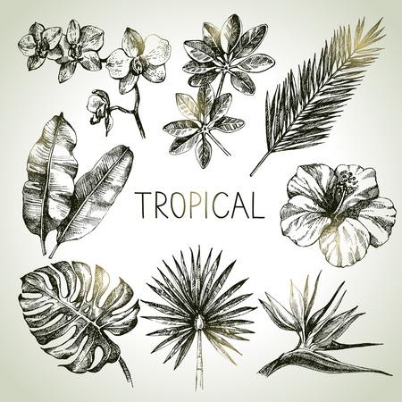 boceto: Extraídas de plantas tropicales de croquis a mano fijados. Ilustraciones vectoriales Foto de archivo