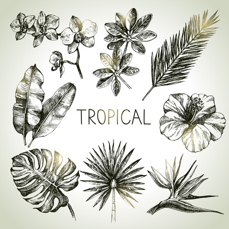 rainforest: Hand drawn sketch tropical plants set. Vector illustrations