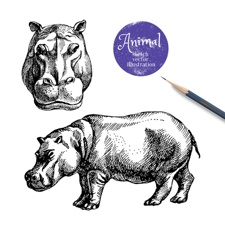 behemoth: Hand drawn hippo animal vector illustration. Sketch isolated hippopotamus on white background with pencil and label banner