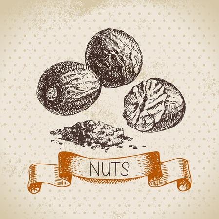 nutmeg: Hand drawn sketch nut vintage background. Vector illustration of eco food