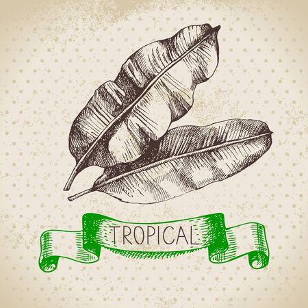 손으로 스케치 열대 식물에게 빈티지 배경을 그려. 벡터 일러스트 레이 션 스톡 콘텐츠