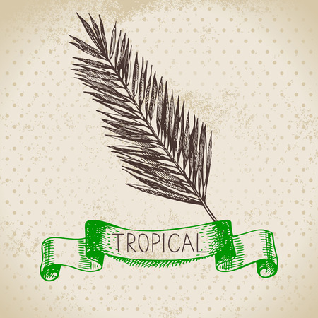 fronds: Hand drawn sketch tropical plants vintage background. Vector illustration
