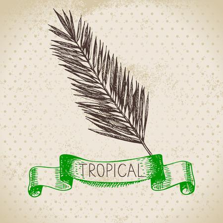 fruit stem: Hand drawn sketch tropical plants vintage background. Vector illustration