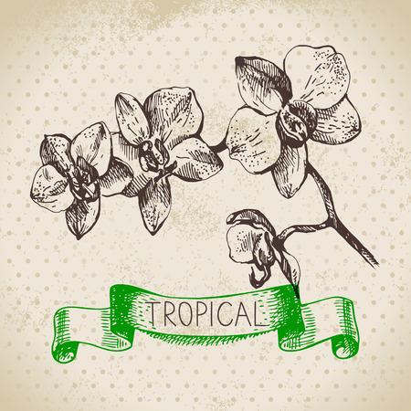 tropical plants: Hand drawn sketch tropical plants vintage background. Vector illustration
