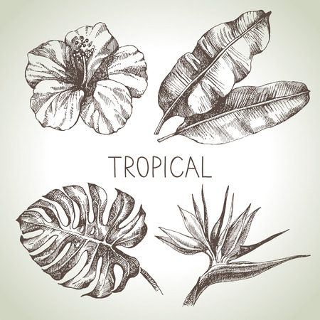 frond: Hand drawn sketch tropical plants set. Vector illustrations