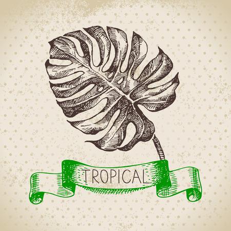 monstera leaf: Hand drawn sketch tropical plants vintage background. Vector illustration