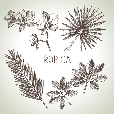 philodendron: Hand drawn sketch tropical plants set. Vector illustrations
