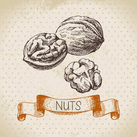 walnut: Hand drawn sketch nut vintage background. Vector illustration of eco food