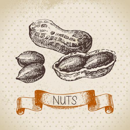 tree nuts: Hand drawn sketch nut vintage background. Vector illustration of eco food