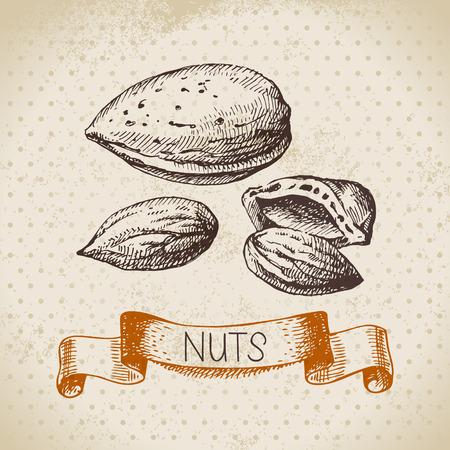 nutshell: Hand drawn sketch nut vintage background. Vector illustration of eco food