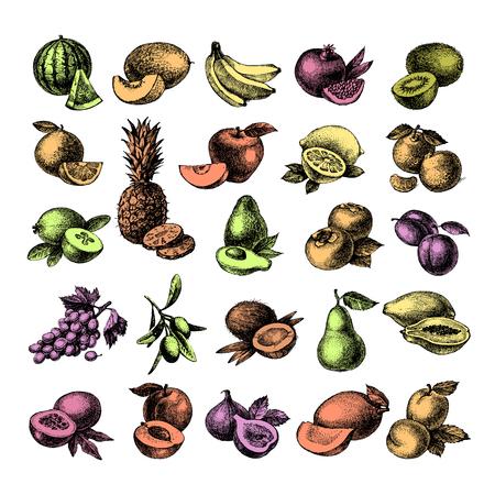 hand drawn: Hand drawn sketch fruit set. Eco foods. Vector illustration