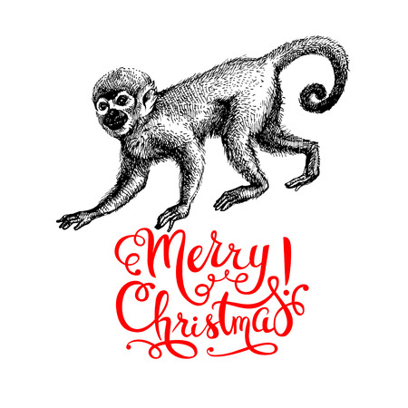 merry: Hand drawn monkey animal vector illustration. Merry Christmas and Happy New Year card. Sketch isolated marmoset on white background Illustration