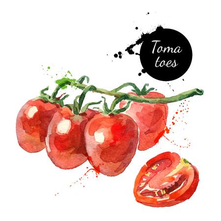 tomates: Acuarela datterino tomates. Ilustración aislada de alimentos eco en el fondo blanco