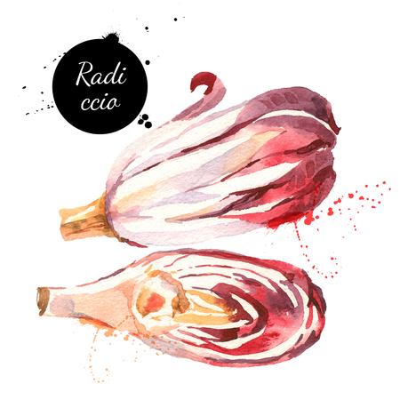 水彩ラディッキオ赤トレヴィーゾ チコリ。白い背景の上の隔離された環境食品イラスト