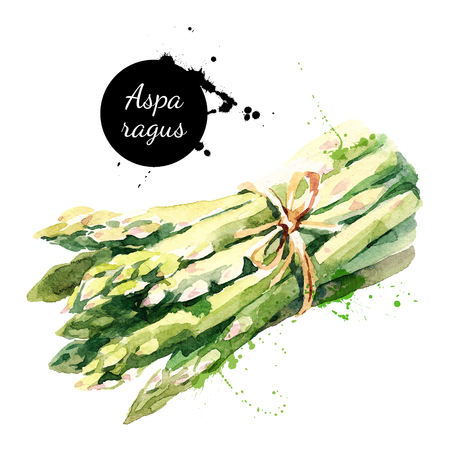 水彩のアスパラガス。白い背景の上の隔離された環境食品イラスト