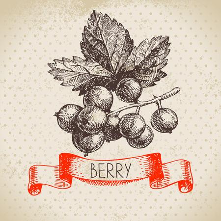 currants: Red currants. sketch berry vintage background. illustration of eco food