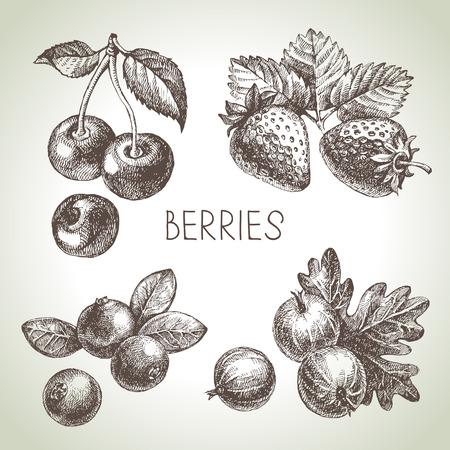 果実セットをスケッチします。エコ食品のイラスト