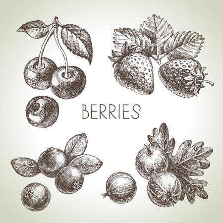 sketch berries set. illustration of eco food