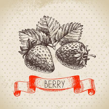 イチゴ。ベリー ヴィンテージ背景をスケッチします。エコ食品のイラスト  イラスト・ベクター素材