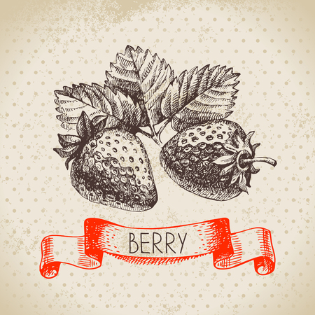 Strawberry. sketch berry vintage background. illustration of eco food