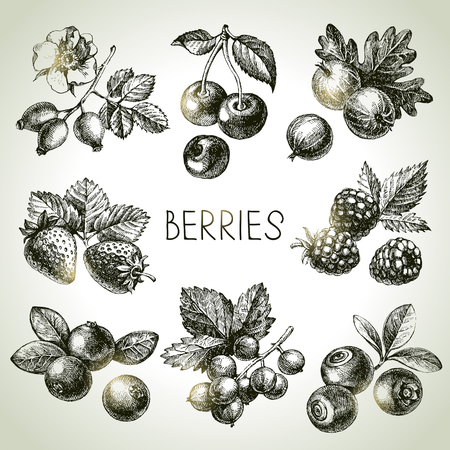 fruit juices: Hand drawn sketch berries set. Vector illustration of eco food
