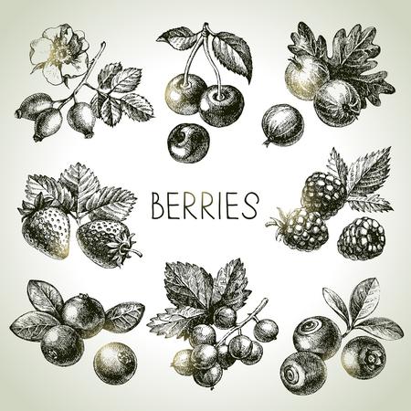Hand gezeichnete Skizze Beeren gesetzt. Vektor-Illustration der Öko-Lebensmittel