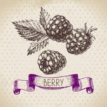 raspberry: Raspberry.  sketch berry vintage background. illustration of eco food