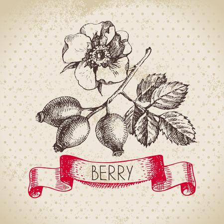 Rose hips. sketch berry vintage background. illustration of eco food