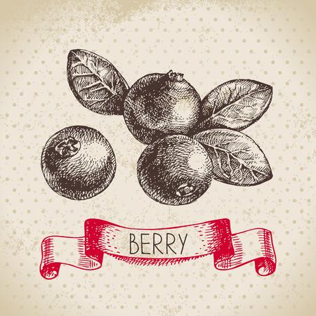 クランベリー。 ベリー ヴィンテージ背景をスケッチします。エコ食品のイラスト
