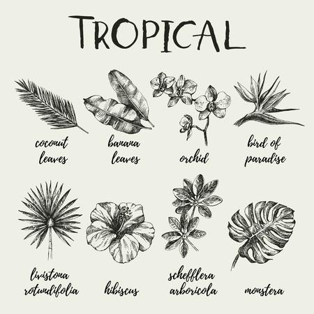 Hand drawn vintage retro sketch tropical plants set. Vector illustrations