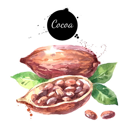 cacao: Watercolor hand drawn cocoa pod. Isolated organic natural eco vector illustration on white background