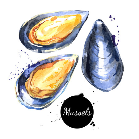 Watercolor hand drawn fresh mussels. Isolated organic natural vector illustration on white background Stock Illustratie