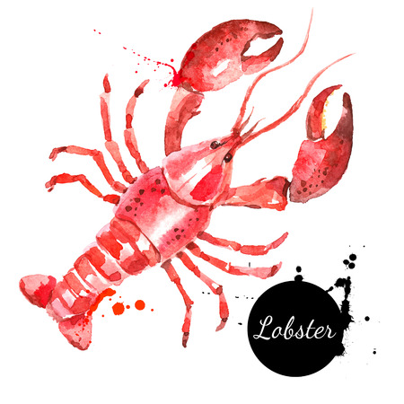 shellfish: Watercolor hand drawn lobster. Isolated fresh seafood or shellfish food  vector illustration on white background Illustration