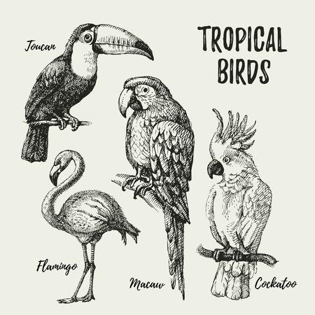 Dibujado a mano negro boceto y las aves exóticas vendimia fijados. Ilustración del vector de objetos aislados