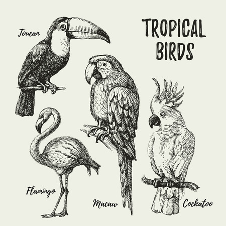 Hand drawn sketch black and white vintage exotic tropical birds set. Vector illustration isolated object Vettoriali