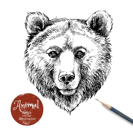 Illustration de vecteur animal ours brun dessinés à la main. Esquisse isolé portrait d'ours sur fond blanc avec bannière crayon et étiquette