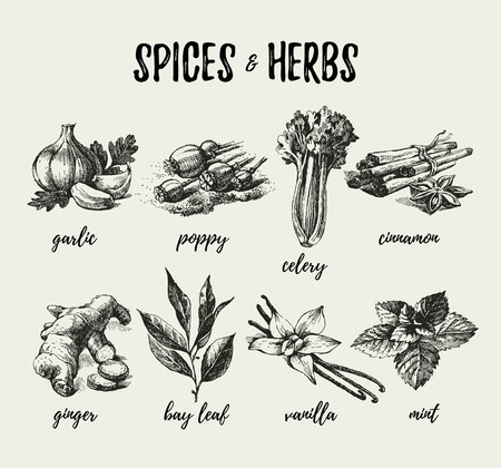 allspice: Kitchen herbs and spices. Hand drawn sketch vintage icons. Vector illustration Illustration