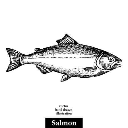 手のサーモン ピンクの魚の描かれたスケッチ シーフード黒と白のベクトル ビンテージ イラスト。白い背景の上の孤立したオブジェクト。メニュー  イラスト・ベクター素材