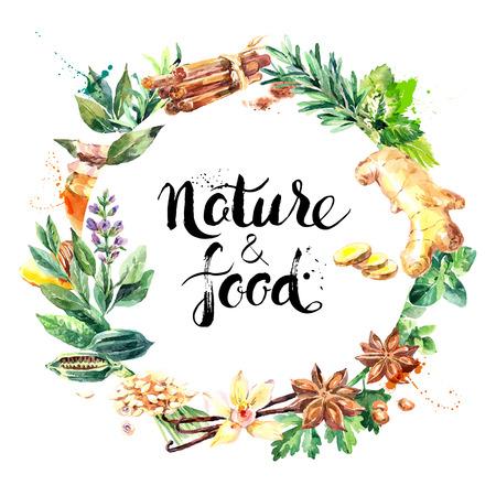 Aquarell von Hand natürlich frische Kräuter und Gewürze auf weißem Hintergrund gezeichnet. Öko-Lebensmittel Bio-Café-Menü-Design