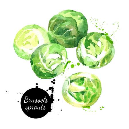 repollo: dibujado a mano acuarela coles de Bruselas frescas. ilustración vectorial ecosistemas naturales orgánicos aislados en el fondo blanco Vectores